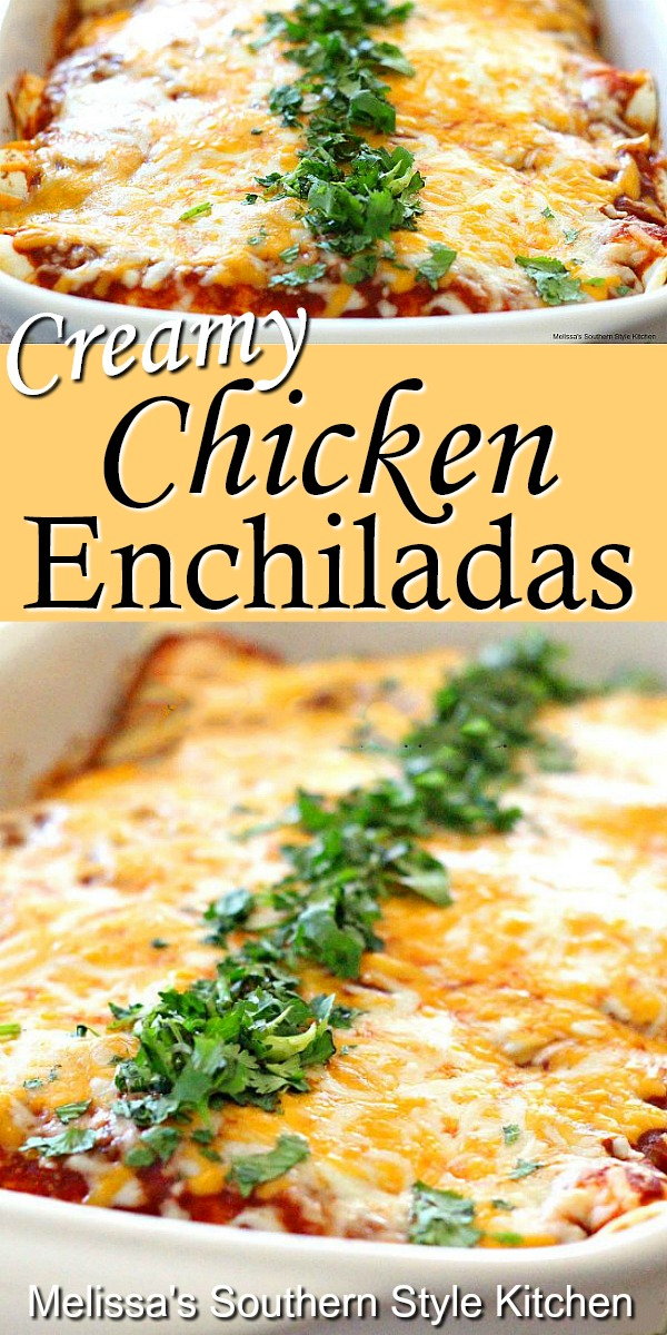 Enjoy a homestyle fiesta with these Creamy Chicken Enchiladas #chickenenchiladas #chickenrecipes #enchiladas #chicken #mexicanfood #southernrecipes #dinnerideas #dinner #southernfood
