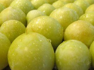 shirro plums