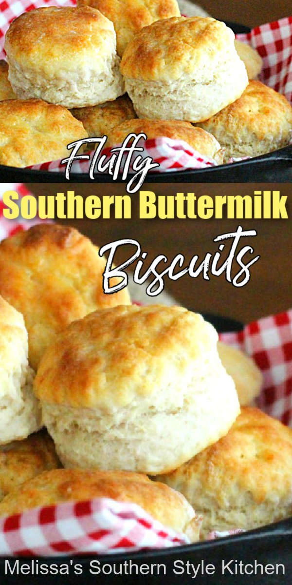 Bake a batch of these spectacular Fluffy Southern Buttermilk Biscuits to go with any meal #buttermilkbiscuits #southernbiscuits #biscuits #biscuitrecipes #southernfood #southernrecipes #bread #breakfast #brunch #holidaybrunch #bestbiscuits #bestbiscuitrecipes #holidaybrunch #fallbaking